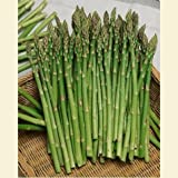 Mary Washington Asparagus (Organic/heirloom) 200 Seeds Upc 643451294767