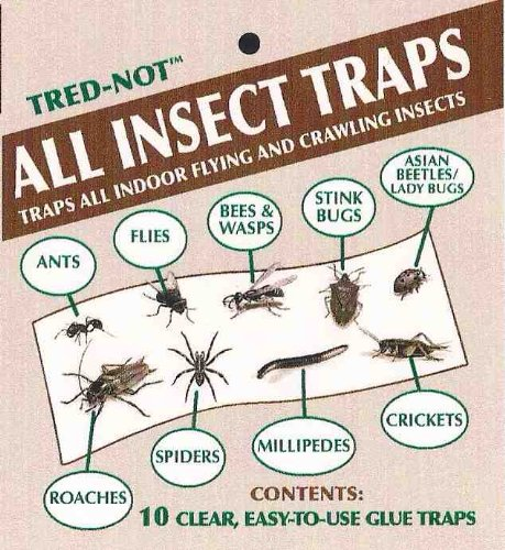 10-pk-millipede-centipede-sow-bug-pill-bug-all-insect-sticky-trap