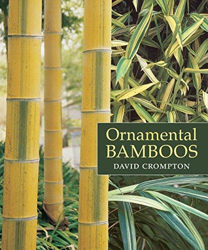 Top 20 Best Bamboo Species Guadua Bamboo