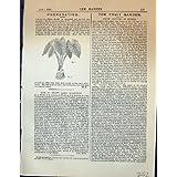 Propagación de la Impresión Antigua del Jardín 1878 de las Plantas de los Caladiums