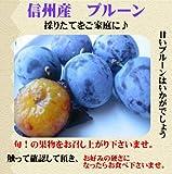 【ご家庭用】信州特産プルーン 2kg プルーン(ミラクルーフルーツ)発送開始 ランキングお取り寄せ