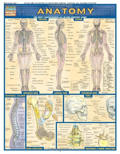 Anatomy (Quickstudy: Academic)