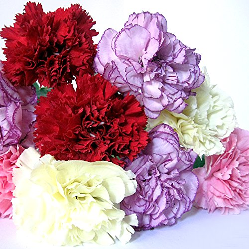 fresh-carnations-body-spray-mist-antiperspirant-deodorant-spray-hair-spray-mister-vegan-animal-cruel