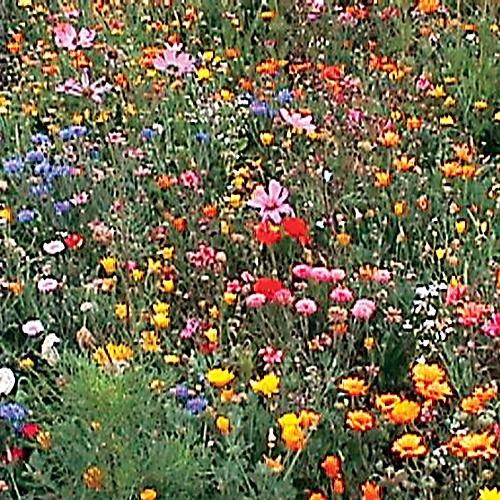 Wildflower Seedballz Annuals, Biennials and Perennials - 2 bag set - 16 Balls