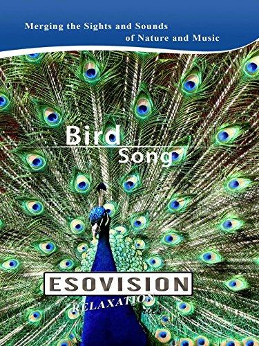 ESOVISION Relaxation BIRD SONG