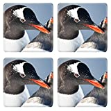 Liili Natural Rubber Square Coasters 4 Pieces Per Order Image Id: 8547734 Two Penguins Playing On The Stony Coast Of Antarctica