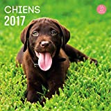 YVON Calendrier 2017 Chiens 16 mois 29 x 29 cm...