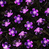 LE Solar Flower Fairy String Lights 50 LEDs 16.5ft, Waterproof, Purple Violet, Portable, Blossom Fairy Christmas Lights with Light Sensor, Outdoor and Indoor Use, Ideal for Wedding, Party, Halloween Lights Decoration