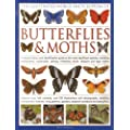 The Illustrated World Encyclopaedia of Butterflies and Moths: A Natural History and Identification Guide to Rare and Familiar Species