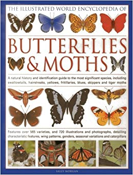 The Illustrated World Encyclopedia of Butterflies and Moths: A Natural History and ... - photo#7