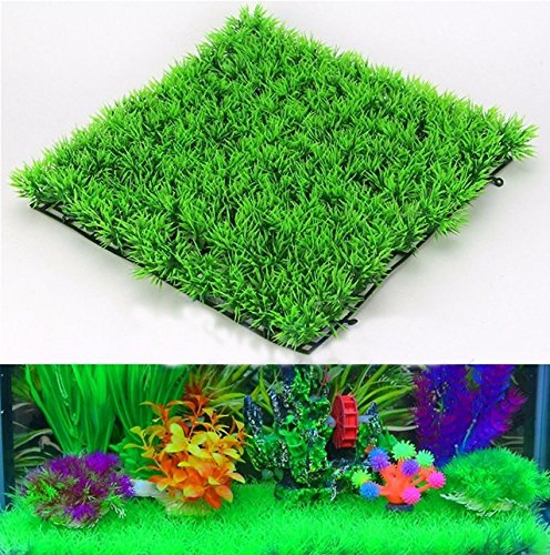 zpp-simulazione-edificio-di-scena-con-piante-acquario-ornamento-pesce-serbatoio-fornisce-la-crittogr