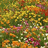 Biocarve California Poppy - Pack of 300 Seeds