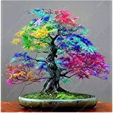 50 Maple Seeds Rare Rainbow Maple Tree Seeds Japanese Bonsai Tree For Home Garden Planting Natural Growth Potted Plants (Color: Show In Picture, Tamaño: Show In Picture)