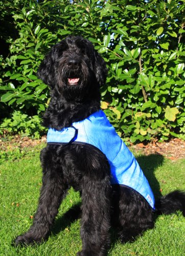 Prestige Cool Coat for Dogs, XL, Blue