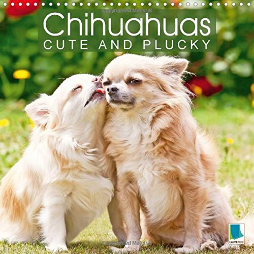 chihuahuas-cute-and-plucky-2016-the-smallest-dog-breed-in-the-world