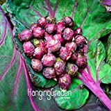 New Seeds 2015!Purple Thousand-headed Cabbage Seed Brussels Sprouts Cabbage Mini Vegetable Seed Gift * 10 Pcs/...