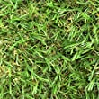 4m x 6m Zaragoza 30mm Pile Height Artificial Grass | Natural & Realistic Looking Astro Garden Lawn | 19 ft 8 Inch x 12 ft 10 Inch | 600cm x 400cm | 236 x 157 Inches | High Density Fake Turf