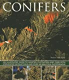 img - for Conifers: An Illustrated Guide to Varieties, Cultivation and Care, with Step-by-Step Instructions and Over 160 Beautiful Photographs book / textbook / text book
