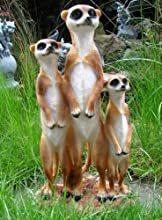 Garden figura de diseño de suricatos