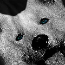White Husky Dog Puppy Animal Fun Men Black Hoodie S-5XL | Wellcoda