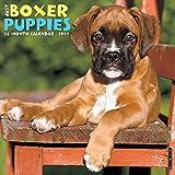 Just Boxer Puppies 2017 Wall Calendar (Dog Breed Calendars)