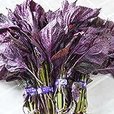 赤しそ 特別栽培 2kg 8束入 福岡県産 赤紫蘇 赤シソ