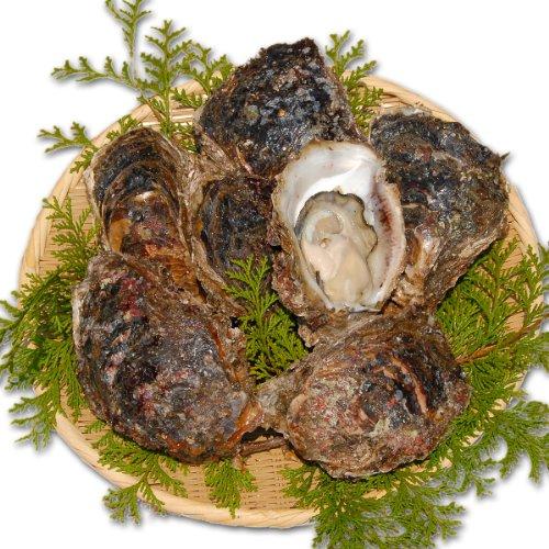 【天然】大分県佐賀関産 活き岩牡蠣 中-特大サイズ 10個(約2.5kg)岩ガキ/生カキ