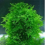 Hot Selling!!! 1bag=200pcs rare flower seeds mini aquarium grass seeds tank underwater aquatic plant seeds easy plant seeds home & garden gift (Color: as picture)