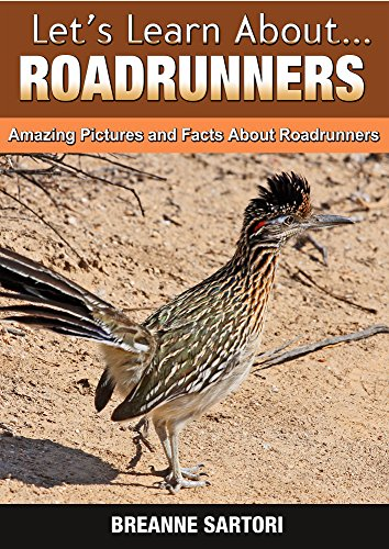 roadrunners-amazing-pictures-and-facts-about-roadrunners-lets-learn-about