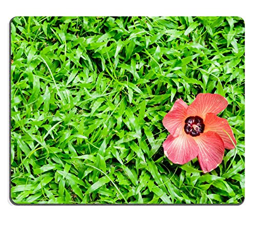 msd-natural-rubber-gaming-mousepad-image-id-34977053-beautiful-background-green-grass-and-red-flower