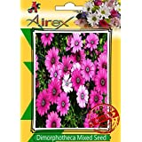 Airex Dimorphotheca Mixed Flower Seeds( Pack Of 20 Seeds Per Packet)