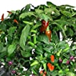Miracle-Gro AeroGarden Chili Pepper Seed Pod Kit (7-Pods) by AeroGrow