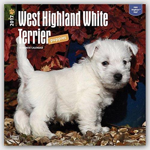 West Highland White Terrier Puppies - Westy-Welpen 2017 - 18-Monatskalender mit freier DogDays-App: Original BrownTrout-Kalender