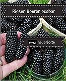 25x Riesen Beeren Samen Hingucker Pflanze Rarität Obst essbar lecker