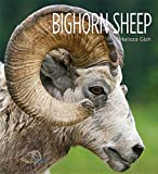 img - for Bighorn Sheep (Living Wild (Hardcover)) book / textbook / text book