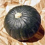 北海道産 栗味かぼちゃ 6玉 (合計10kg以上) 北海道産かぼちゃ