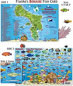 Bonaire Reef Creatures Fish ID for Scuba Divers and Snorkelers