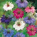 Nigella Persian Jewels mixed - Annual - 400 seeds