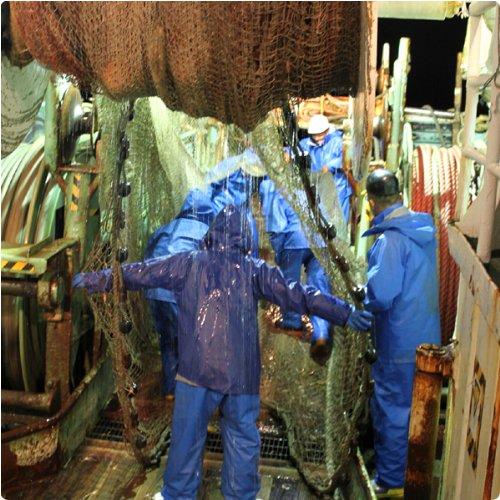 本物の目利きが選ぶ 鳥取網代の松葉ガニ 蟹尽くしセット 茹で 総重量1kg(3-4枚)送料無料