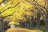 めざせパズルの達人 1000ピース 黄金色の散歩道 東京 10-734