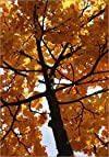 Autumn Leaves Photo Tree