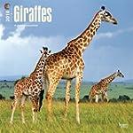 Giraffes 2016 Square 12x12 Wall Calendar