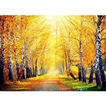 ArtzFolio Autumnal Trees In Sun Rays - Extra Large Size 50.0 Inch X 35.9 Inch - UNFRAMED PREMIUM MUSEUM-GRADE...
