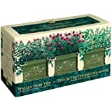 Garden At Home - Italian Herb Trio (Discontinued by Manufacturer)
