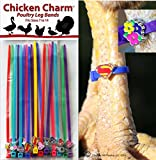 20 Chicken Charm TM Poultry Leg Bands - Fit Sizes 7 to 14