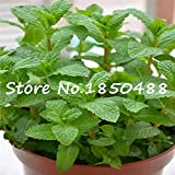 Foliage Plant Seeds Mentha Citrata, Herbal Lemon Balm,mint Lemon Seeds,about 100 Particles