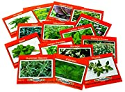 16 HERB SEED VARIETIES FOR COOKING - Cilantro, Basil, Parsley and more. Enjoy a fresh herb garden for your meals. Easy to sprout. Growing instructions for each herb. Satisfaction Guaranteed