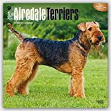 Airedale Terriers 2016 Calendar