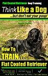 Flat Coated Retriever Dog Training |...