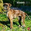 Boxers 2013 - International - Original BrownTrout-Kalender